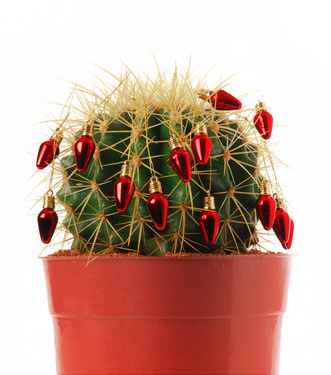 Cactus Decorated For Christmas