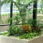 Creative Interior Plantscapes - Photo Gallery