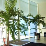 Palm trees in foyer or lobby of office building