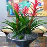 Interior plants ~ Bromeliad