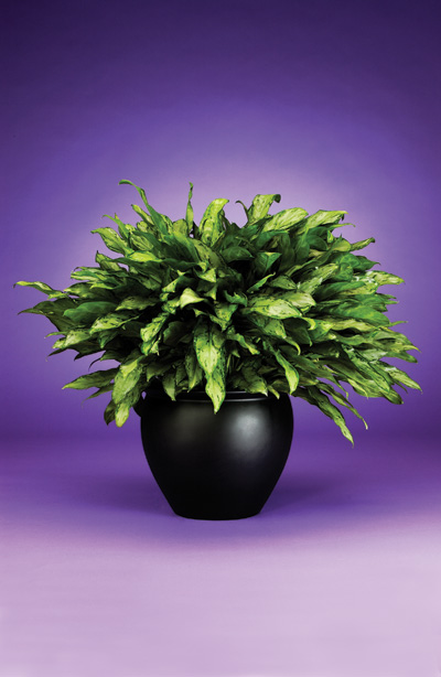 Low light plants creative interior plantscapes - Low light houseplants trees ...